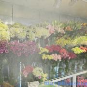 máy phun sương shop hoa tươi