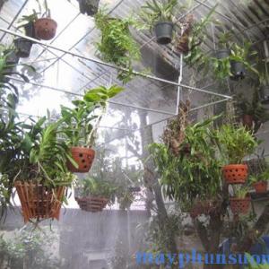 hệ thống phun sương tưới vườn lan