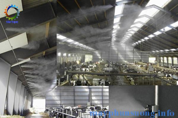 hệ thống phun sương làm mát chuồn trại
