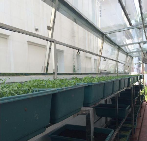 Hệ thống phun sương trồng rau 1