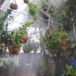 Dùng máy phun sương công suất lớn có hiệu quả không?
