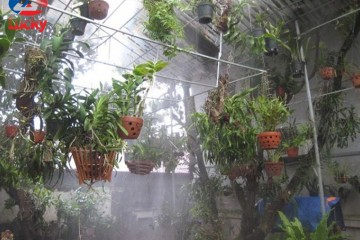 Tổng hợp một số loại béc phun sương tưới lan thông dụng