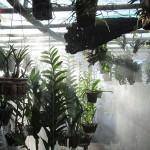 Mẹo thiết kế máy phun sương cho vườn lan giá rẻ.