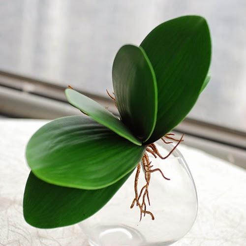 cách trồng lan hồ điệp tại nhà