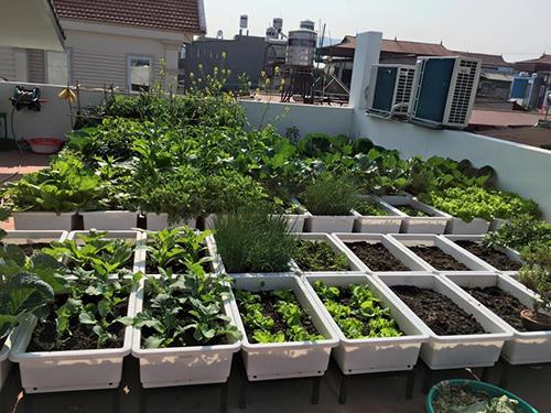 các mẫu vườn rau trên sân thượng