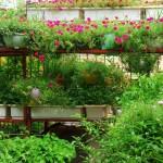 Cách làm vườn rau trên sân thượng đẹp chỉ trong vòng 6 bước