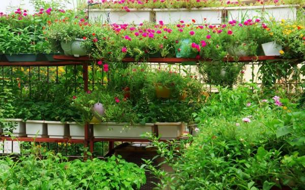 tự thiết kế vườn rau trên sân thượng