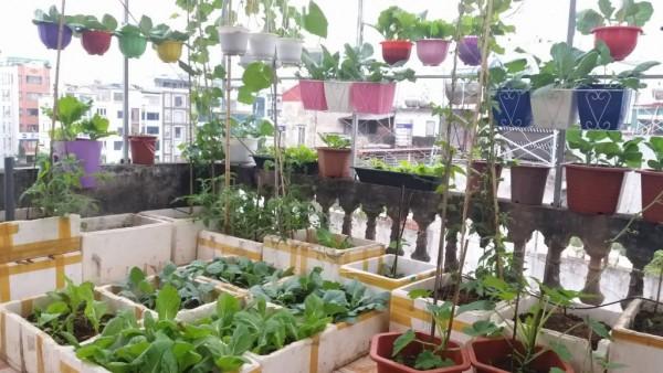 cách làm vườn rau trên sân thượng