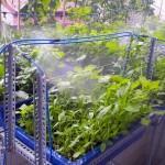 Sự thật không ngờ về hệ thống tưới phun sương cho rau