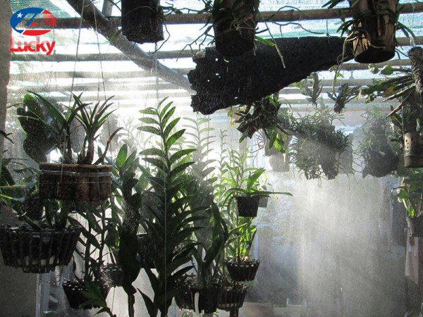 Tưới nước vôi cho lan giúp lan phát triển tốt