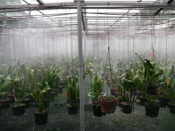 hệ thống phun sương tưới lan
