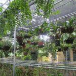 Có cần thiết để đầu tư một hệ thống tưới vườn lan?