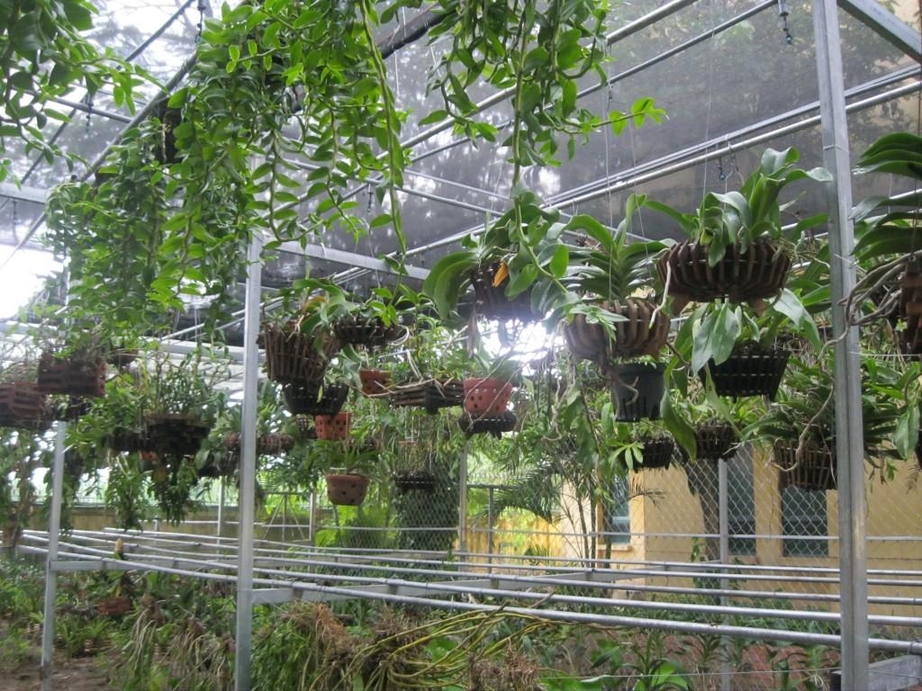 hệ thống tưới vườn lan