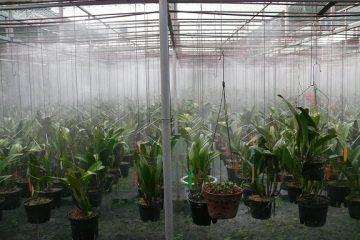 Máy phun sương tưới cây